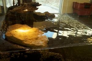 Basking Light in Turtle Tank
