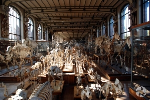 Skeletons in the Gallery of Palaeontology and Comparative Anatomy, Paris, France.