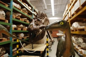 Dinosaur models, mounted specimens and field-jacketed specimens in the collections of the Canadian Museum of Nature.