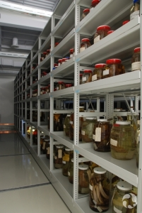Shelves with jars containing fish specimens preserved in ethanol.