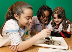 Students observing aquatic organisms.