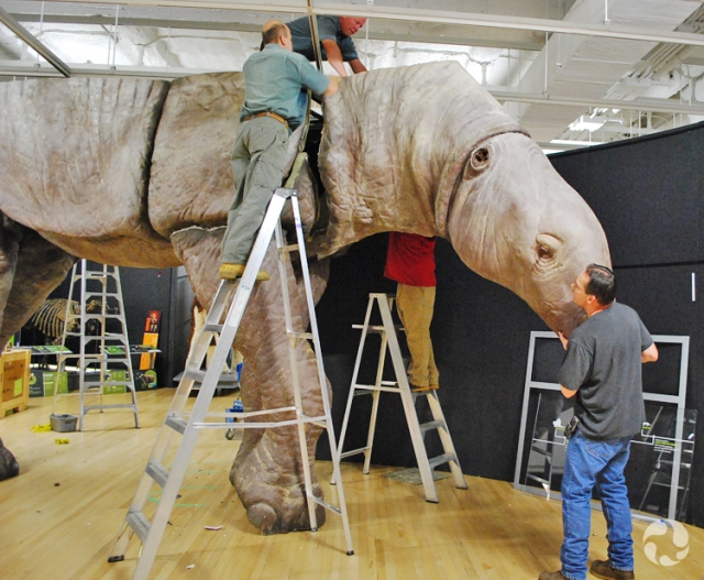 Four men installing the neck and head of the Indricotherium model.
