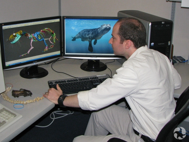 A man in front of a computer screen that is showing a virtual reconstruction of Puijila darwini.