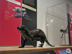 The bronze sculpture of Puijila darwini and a 3D impression of its skeleton in the back ground.
