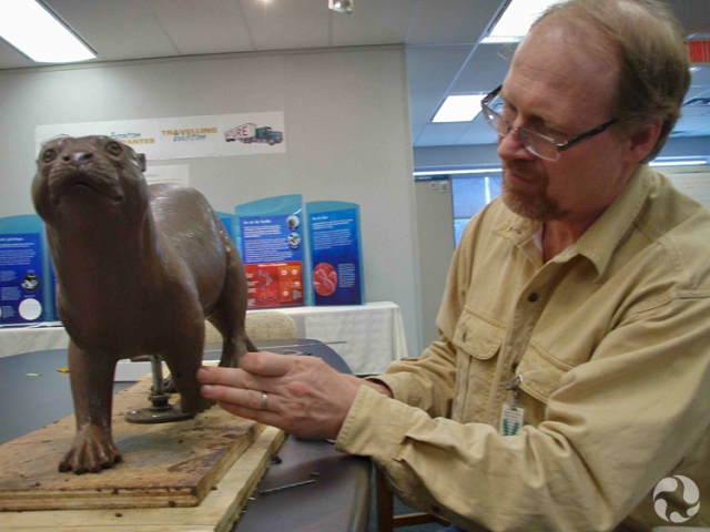 Kevin Hockley, putting the finishing touch to the clay sculpture of Puijila darwini.