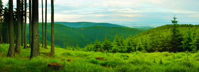 View through a clearing of a forested, hilly landscape.