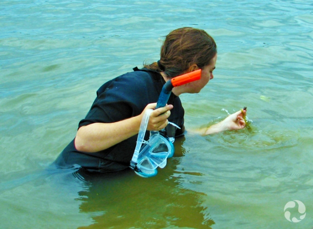 Up to her waist in a river, a woman examines a small shell that she is holding. In her other hand is a mask and snorkel.