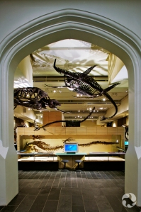 Several skeletons, including that of a long-necked plesiosaur, hanging from a ceiling.