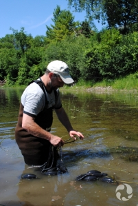 Up to his thighs in the river, Marc Beck holds a loop that is attached to the net.