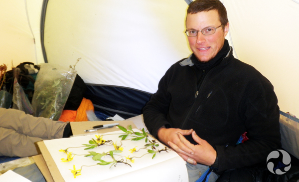 Inside a tent, Roger Bull pauses with a herbarium sheet covered with plant specimens on his lap.