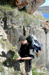 Standing on a steep slope beside a rock face, Roger Bull holds a plant specimen.