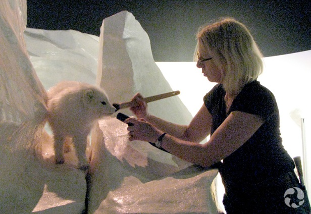 A museum conservator uses a brush to clean a mounted Arctic fox (Vulpes lagopus).