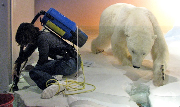 """A staff member vacuums the """"ground"""" in a diorama."""
