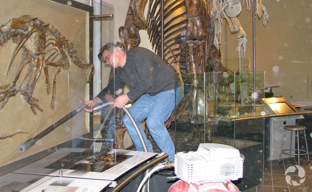 A staff member vacuums behind the transparent panel protecting a panel-mounted fossil.