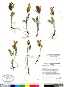 A herbarium sheet.