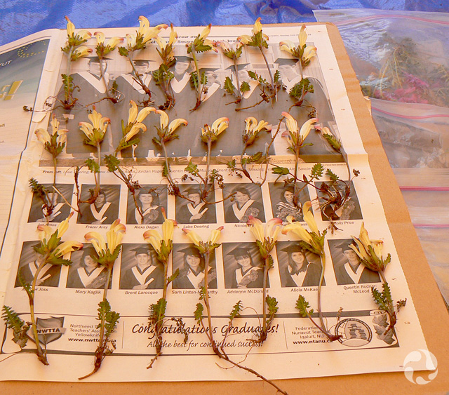 An array of plants, uprooted and laid on a sheet of newspaper.