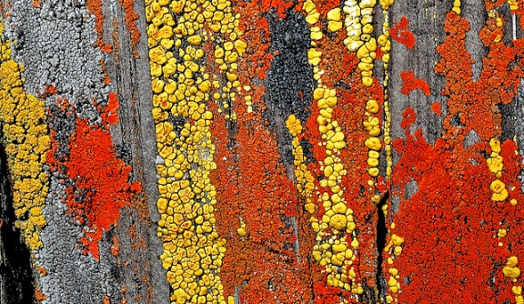 Several brightly coloured lichens (reds, oranges, yellows, grey) cover a rock face.