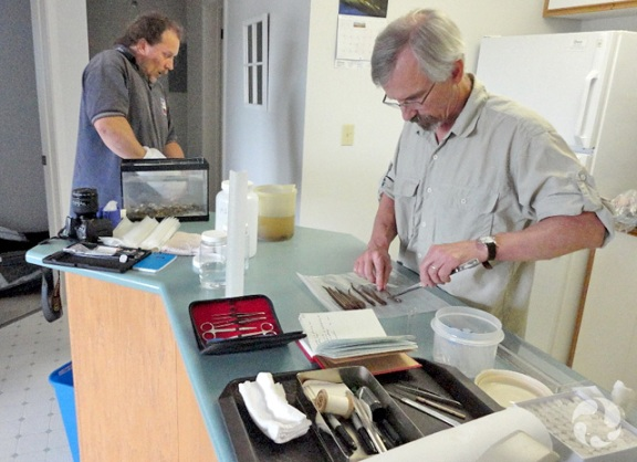 Lab tools are laid out on a kitchen counter, as one man has his hand in an aquarium and another dissects lampreys.