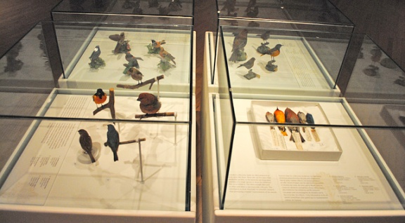 Cases in the gallery containing bird specimens, mounted bird specimens and porcelain birds.