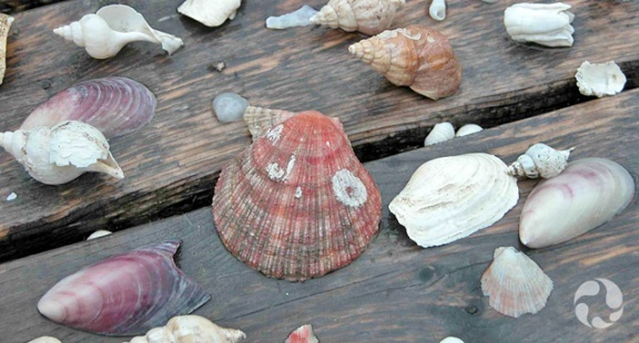 An assortment of shells on boards of a picnic table.