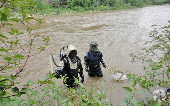 Two people wearing chest waders and bug masks standing in a river.