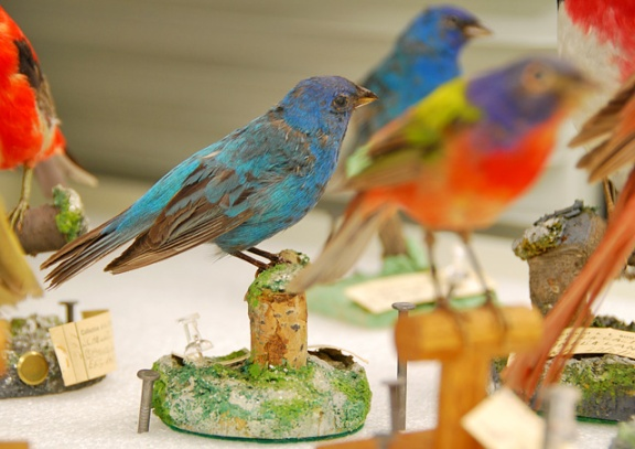 Several mounted bird specimens.
