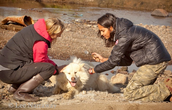 Two women brush a white dog.
