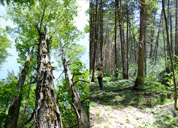 Two views of a wooded area with trees.