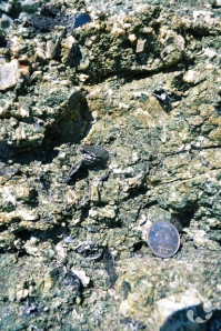 Close-up of rock with small black mineral embedded.