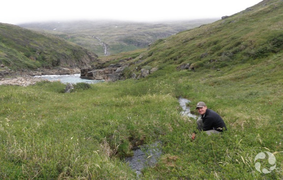 A man crouches in the plants near a small river.