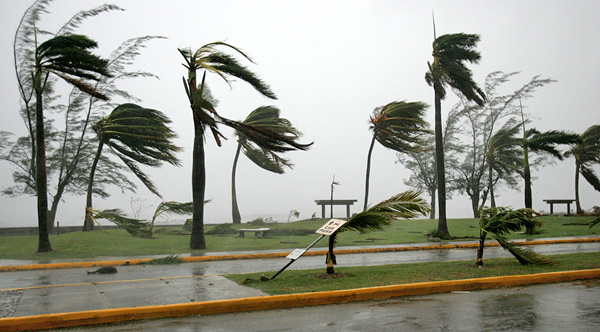 Palm trees being blown by a hurricane.