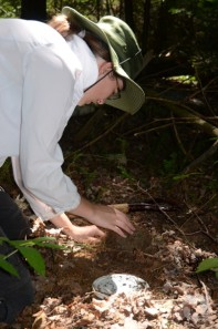 A woman installs a plastic container into a hole dug into forest floor.