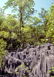 Amid some trees, a limestone cliff face inscribed with vertical channels from erosion.
