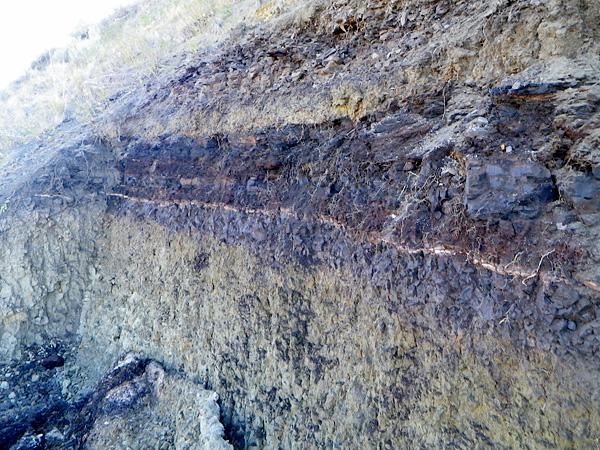 The sedimentary rock face in situ.