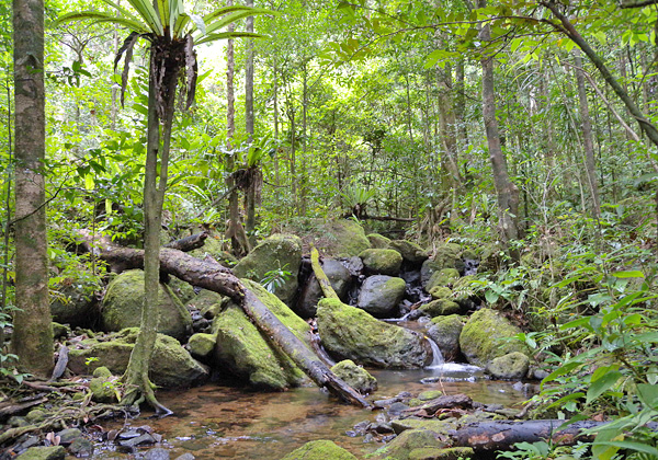A stream flows over mossy rocks in a rainforest.