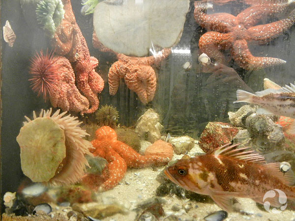 An aquarium containing many animals.