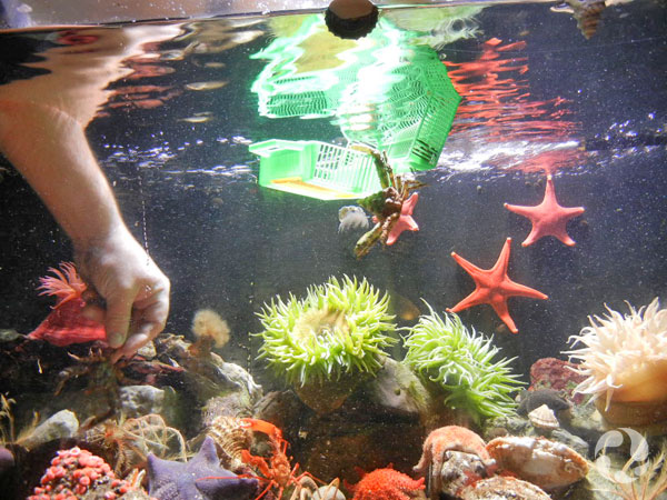 A basket floats and an arm reaches into an aquarium, as seen from below the surface.