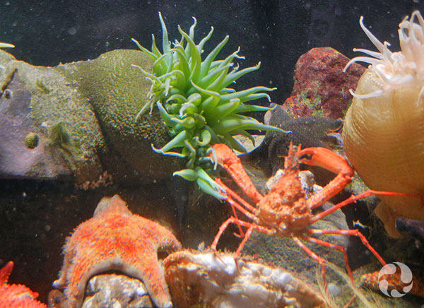 Two animals interact amid other animals in the aquarium.