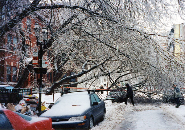 A fallen tree covered with ice blocks a street.