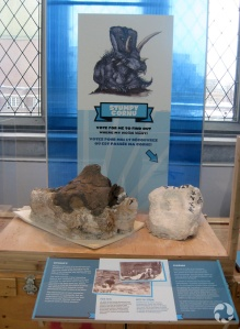 Stumpy on display in the museum.