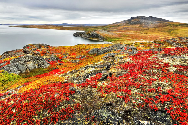 Red and yellow plants cover a rocky landscape along shore.