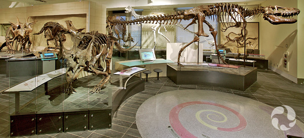 Panorama of dinosaur skeletons in Talisman Energy Fossil Gallery.