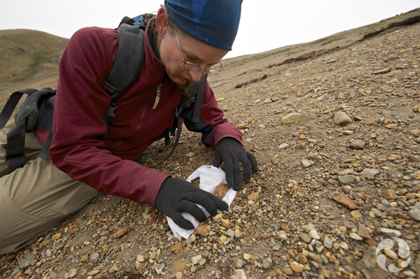 Natalia Rybczynski places toilet paper under a fossil bone found on sandy slope.