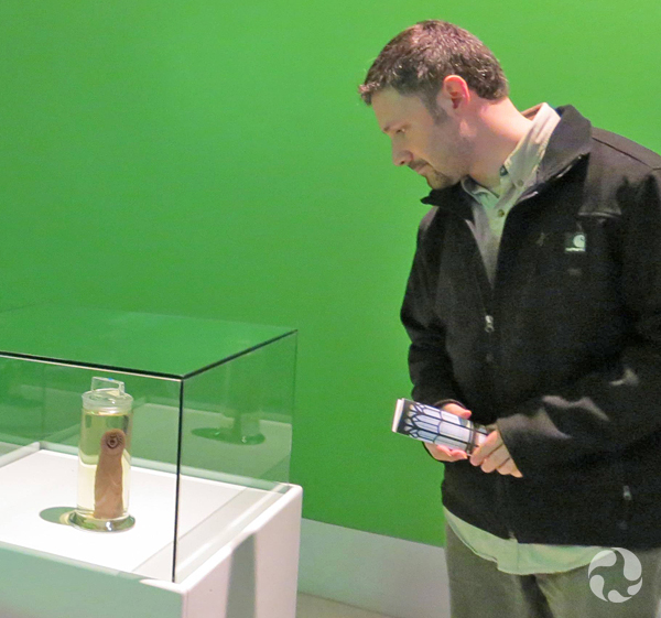 A man looks at a lamprey specimen on display.