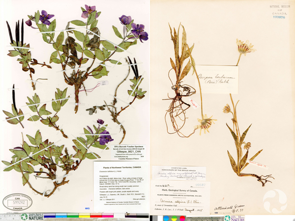Two specimen images.