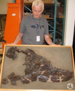 The skull of Albertosaurus in the museum's collections.