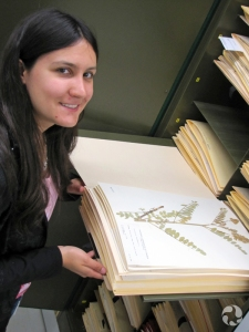 A woman stands at an open cabinet containing herbarium sheets.