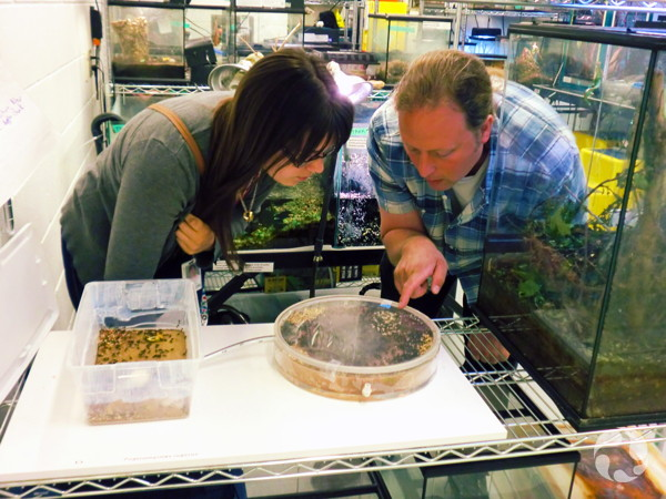 Two people bend to look at a disk-shaped, clear container on a counter amid terrariums.