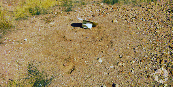 A hat is placed next to a harvester-ant nest in the Arizona desert.