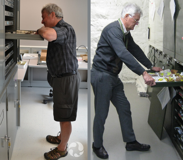 Two photos, each depicting a man opening a specimen drawer in a row of cabinets.